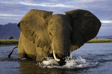 Ruckomechi elephant  1280x852