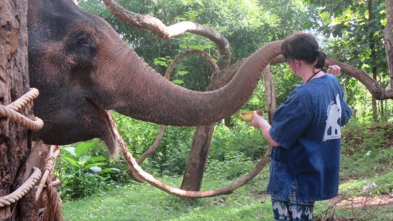 Tongbai Elephant Camp
