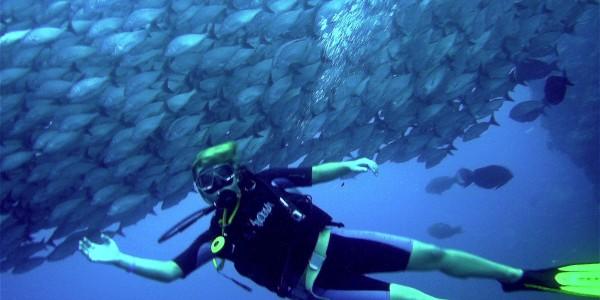 diving_01.TE