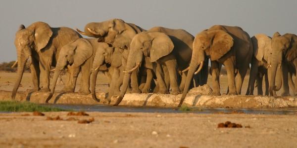 Chobe National Park - wilderness