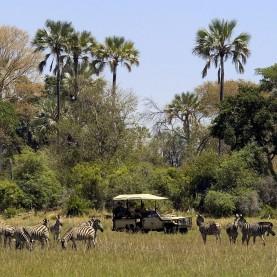 Okavango wildlife safari