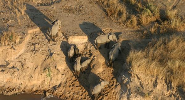Remote-Africa-Safaris---wildlife