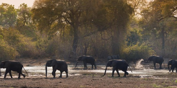 Zimbabwe - Mana Pools National Park - Elephant