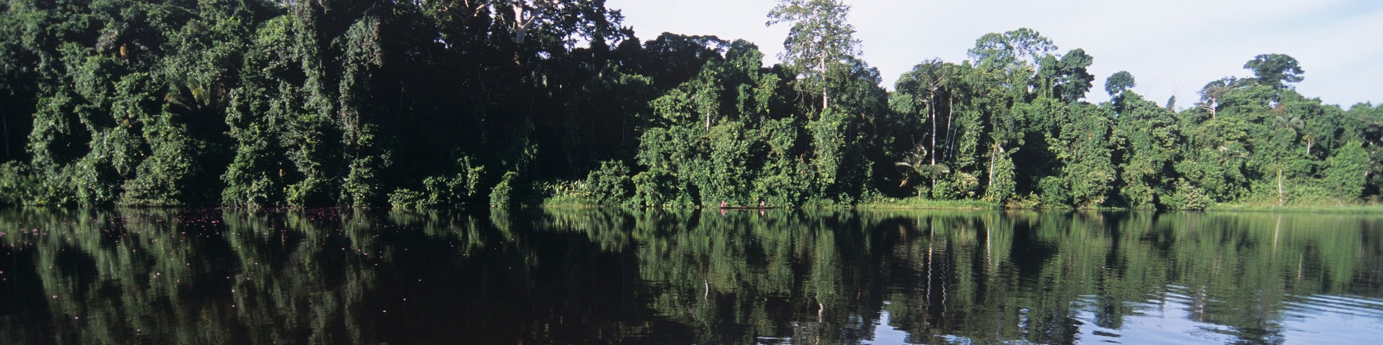 Lake Sandoval, Amazon