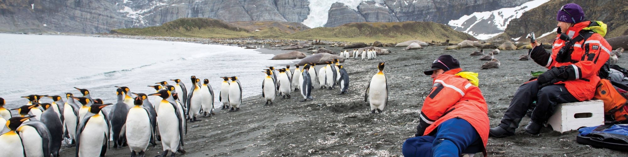 AN - South Georgia - Hebridean Sky - King penguins on beach with persons