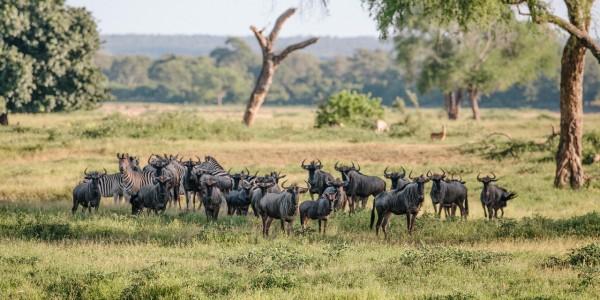Zimbabwe - Gonarezhou National Park - Wildlife 2
