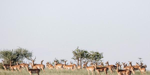 Zimbabwe - Gonarezhou National Park - Wildlife