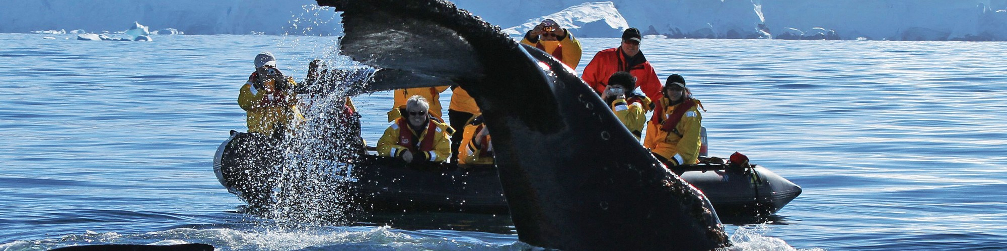 Antarctica - Gen - Hebridean Sky - Whale watching from zodiac