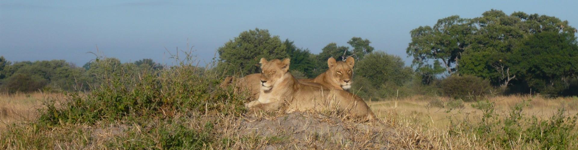 Botswana Lions Educational May 2008 100