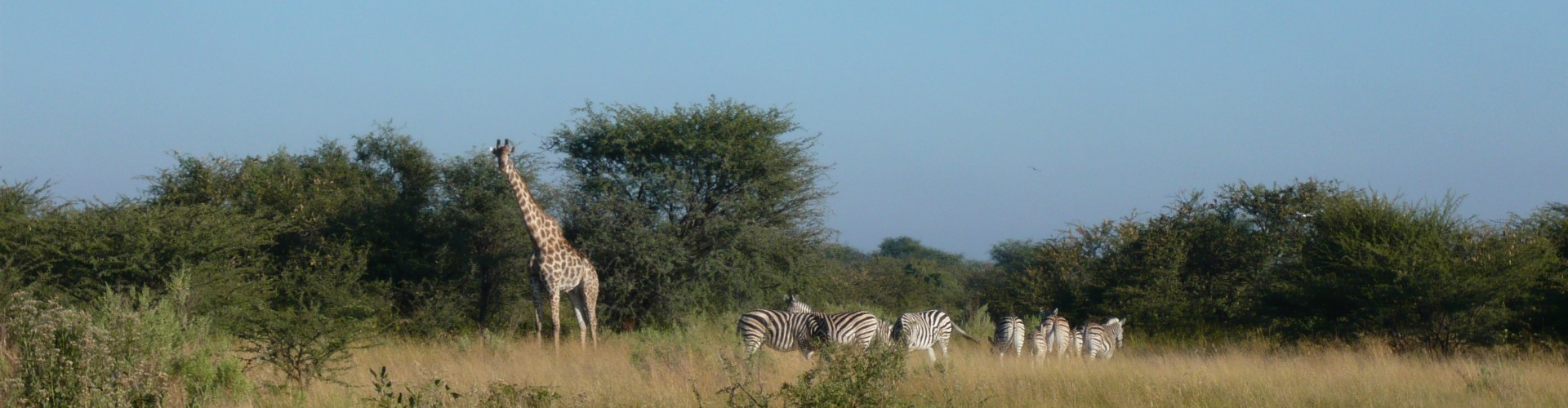 Botswana Giraffe Educational May 2008 103