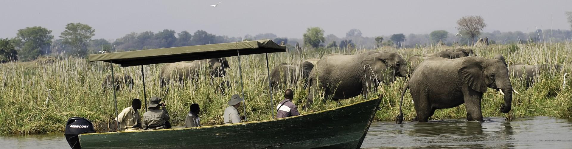 Malawi - Mvuu Lake Elephants