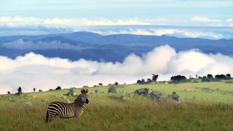 Malawi - Nyika Hills