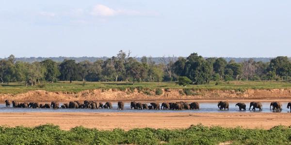Zimbabwe - Gonarezhou National Park - Chilo Gorge Safari Lodge - Elephants