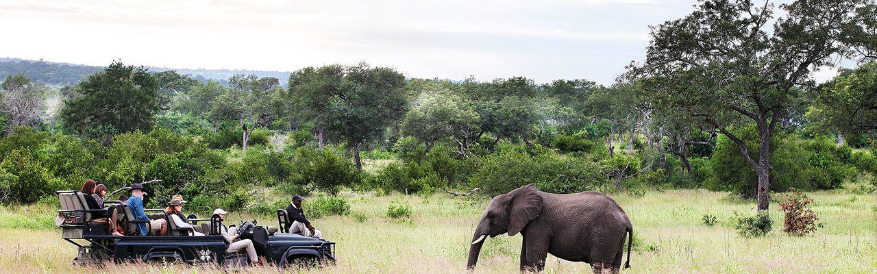 South Africa - Kruger National Park & Private Game Reserves - Londolozi Varty Camp - Safari