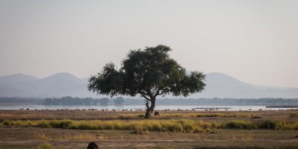 Zimbabwe - Mana Pools National Park - Chikwenya - Plains
