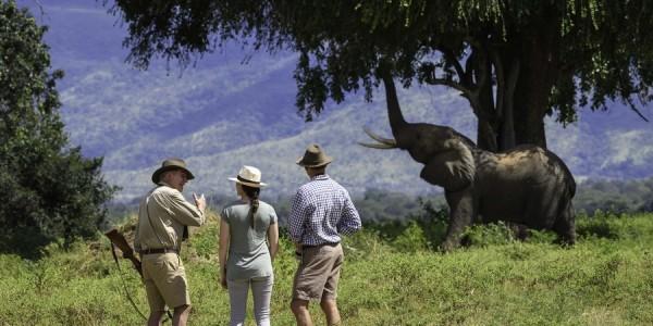 Zimbabwe - Mana Pools National Park - John's Camp - Elephant
